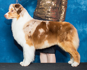 Group Placing AKC CH Empyrean N CopperRidge's Crown Royale